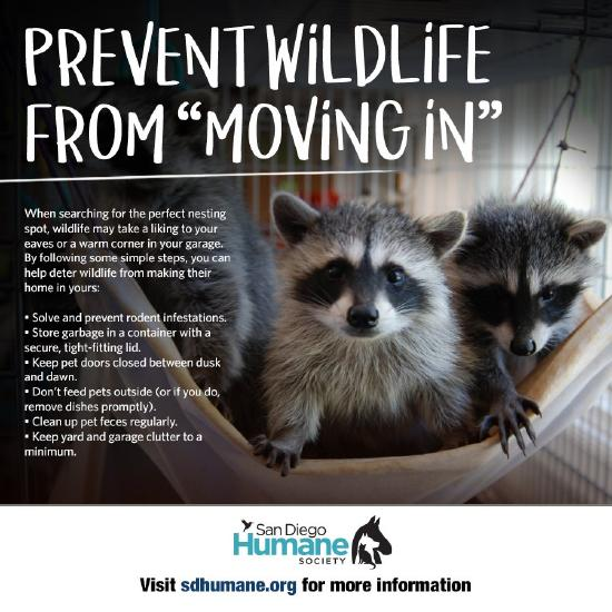 Prevent Wildlife from Moving In